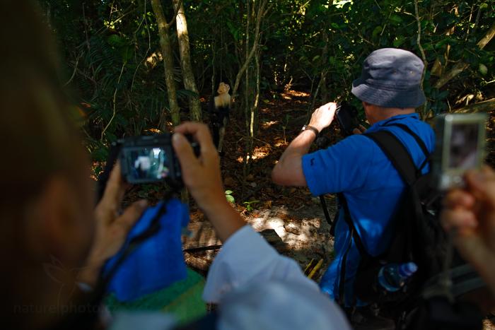 Malpa kapucínská (Cebus capucinus)