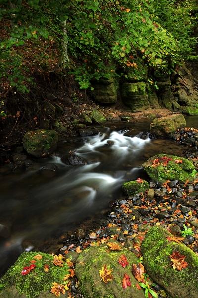 Podzimní zátiší u potoka