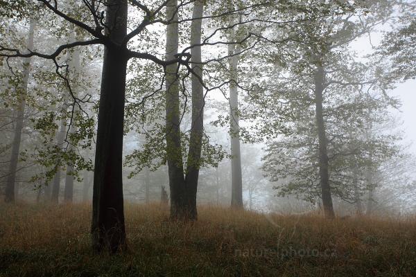 Mlžná nálada v lese
