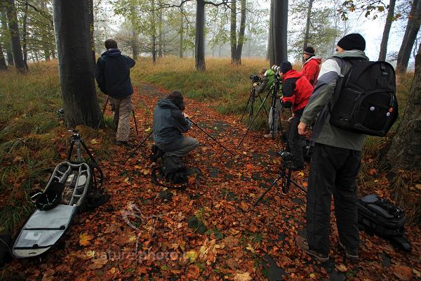 Fotografické zaujetí v podzimním listí
