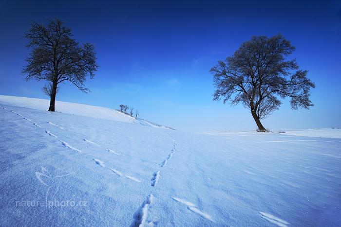 Zimní krajina se stromy