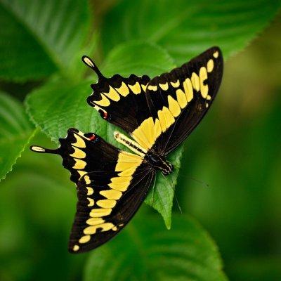 Fotografický workshop Motýli a orchideje | NaturePhoto.cz